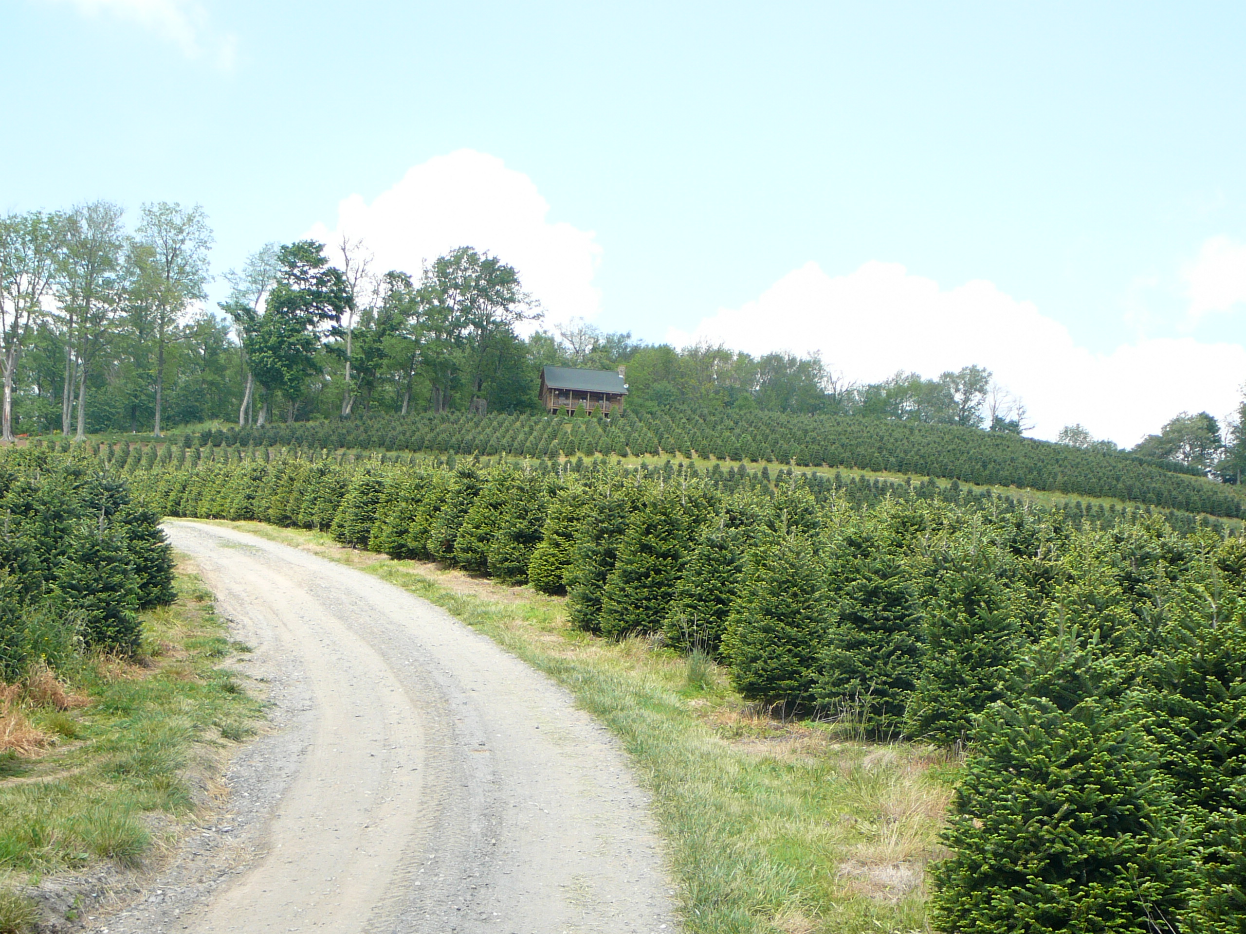 COASTAL EVERGREEN TREE FARMS - North Carolina Fraser Firs